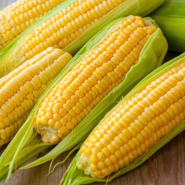 Espigas de milho sobre a mesa